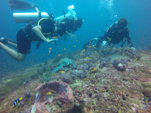 Andamans Try Dive at Sea Shell Reef