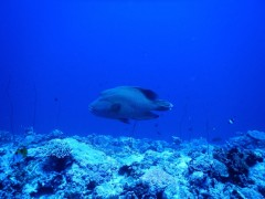 http://www.thegreatnext.com/Scuba Diving Fun Dive Andaman Havelock Adventure The Great Next