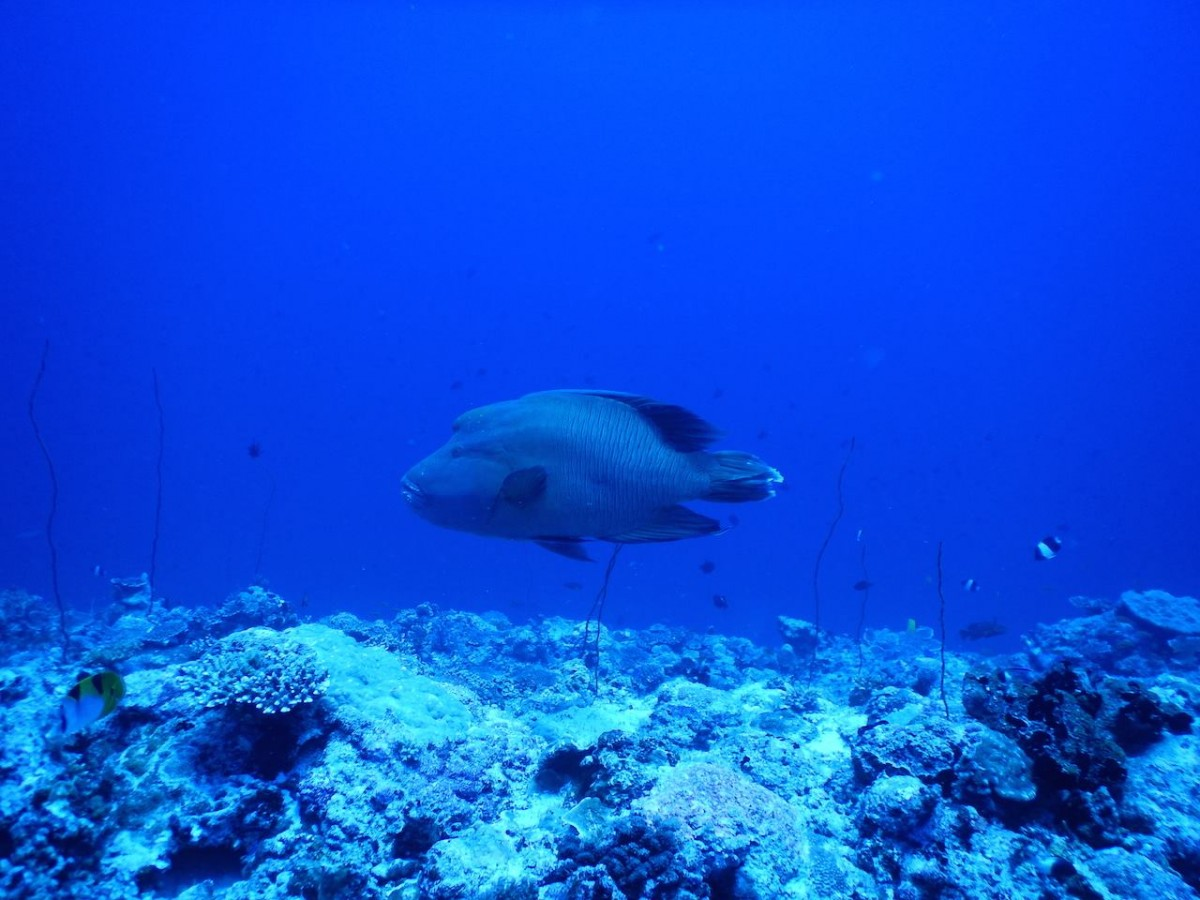 http://m.thegreatnext.com/Scuba Diving PADI AOWD Andaman Havelock Adventure The Great Next