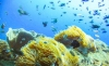 http://www.thegreatnext.com/Snorkelling Koh Chang Thailand Adventure Travel The Great Next