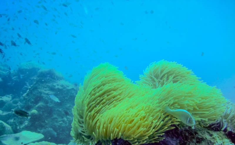 http://m.thegreatnext.com/Scuba Diving Koh Chang Thailand Adventure Travel The Great Next
