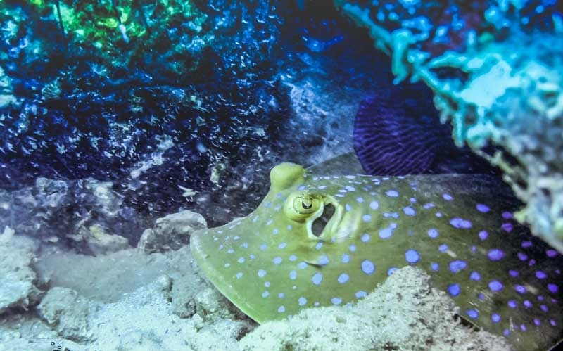http://www.thegreatnext.com/Scuba Diving Koh Chang Thailand Adventure Travel The Great Next
