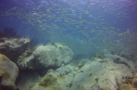 http://www.thegreatnext.com/Scuba Diving Koh Chang PADI Open Water Diver Thailand Adventure Travel The Great Next