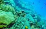 http://m.thegreatnext.com/Scuba Diving Koh Chang PADI Open Water Diver Thailand Adventure Travel The Great Next