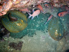 http://m.thegreatnext.com/Scuba Diving Thailand Koh Chang Adventure Travel The Great Next