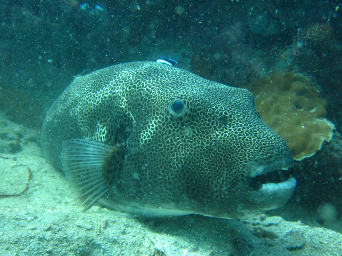 http://www.thegreatnext.com/Scuba Diving PADI Advanced Open Water Diver Thailand Koh Chang Adventure Travel The Great Next