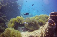 http://www.thegreatnext.com/Scuba Diving Koh Chang PADI Advanced Open Water Diver Thailand Adventure Travel The Great Next