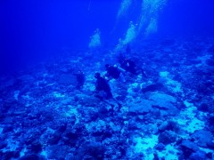 http://m.thegreatnext.com/Scuba Diving Scuba Diver PADI Andaman Havelock Adventure The Great Next
