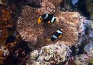 http://m.thegreatnext.com/Scuba Diving Ko Racha Yai Thailand Adventure Travel The Great Next
