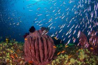 http://m.thegreatnext.com/Scuba Diving Course PADI Andaman Adventure Travel The Great Next