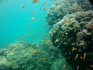 http://www.thegreatnext.com/Scuba Diving Andamans Havelock Adventure Travel The Great Next