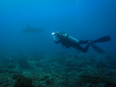 /Scuba Diving PADI Indonesia Bali Padang Bai Adventure Travel The Great Next