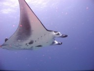 http://m.thegreatnext.com/Scuba Diving Bali Indonesia Nusa Penida Adventure Travel The Great Next