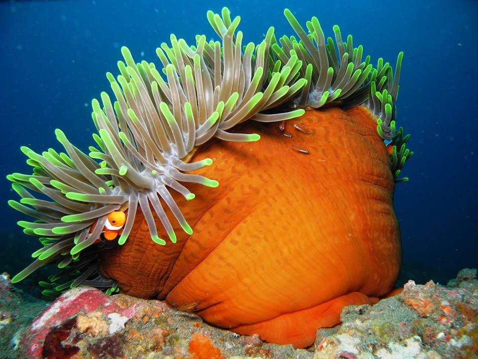 http://www.thegreatnext.com/Scuba Diving Bali Indonesia Amed Adventure Travel The Great Next