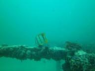 http://m.thegreatnext.com/Scuba Diving PADI Open Water Diver Pattaya Thailand Adventure Travel The Great Next
