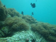 http://www.thegreatnext.com/Scuba Diving PADI Advanced Open Water Diver Pattaya Thailand Adventure Travel The Great Next
