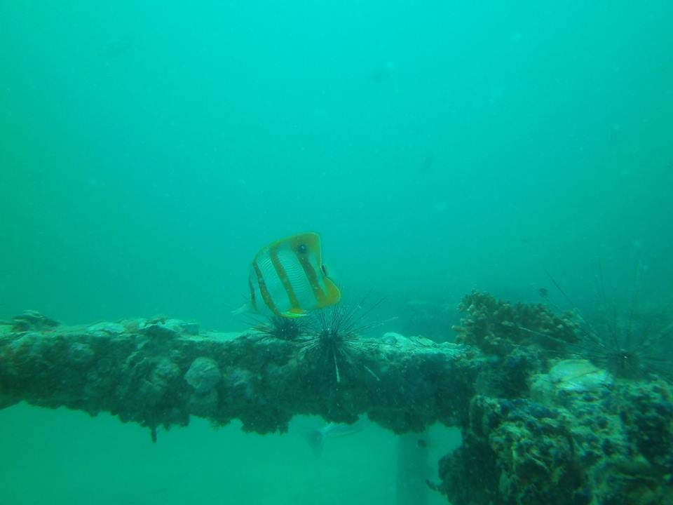 http://www.thegreatnext.com/Scuba Diving PADI Advanced Open Water Diver Pattaya Thailand Adventure Travel The Great Next