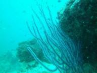 http://m.thegreatnext.com/Scuba Diving PADI Advanced Open Water Diver Pattaya Thailand Adventure Travel The Great Next