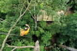 http://m.thegreatnext.com/Ziplining Chiang Mai Thailand Adventure Travel The Great Next