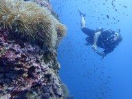 http://www.thegreatnext.com/Scuba Diving PADI Open Water Koh Samui Thailand Adventure Travel The Great Next