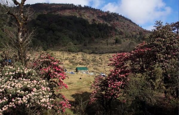 Barsey Rhododendron Trek