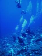 http://m.thegreatnext.com/Scuba Diving Open Water PADI Andaman Neil The Great Next Adventure Travel