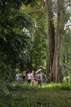 http://m.thegreatnext.com/Bali Trekking Ubud Indonesia Adventure Travel The Great Next