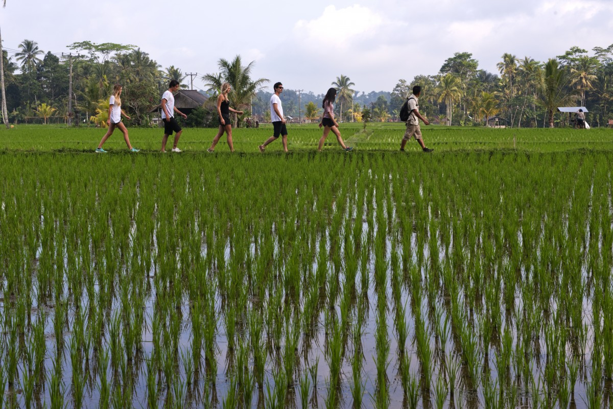 http://m.thegreatnext.com/Bali Trekking Ubud Indonesia Adventure Travel The Great Next