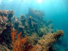 PADI Advanced Open Water Diver in Tulamben, Bali