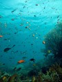 http://m.thegreatnext.com/Scuba Diving PADI Course Advanced Open Water Diver Bali Tulamben Indonesia Adventure Travel The Great Next