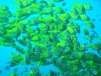 http://www.thegreatnext.com/Scuba Diving Fun Dive Amed Indonesia Adventure Travel The Great Next