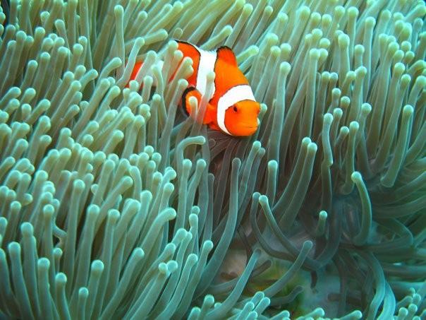 http://m.thegreatnext.com/Scuba Diving PADI Bali Tulamben Indonesia Adventure Travel The Great Next