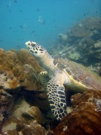 http://www.thegreatnext.com/Scuba Diving PADI Scuba Diver Pattaya Thailand Adventure The Great Next