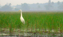 http://www.thegreatnext.com/Sal Backwaters Kayaking Margao Goa Adventure Travel The Great Next