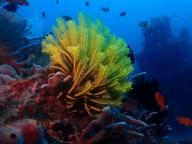 http://m.thegreatnext.com/Scuba Diving Bali Marine Life Underwater Corals Sea Creatures  Indonesia Adventure Travel The Great Next