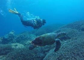 PADI Discover Scuba Diving (shore) in Amed, Bali