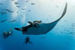 PADI Discover Scuba Diving in Nusa Penida, Bali