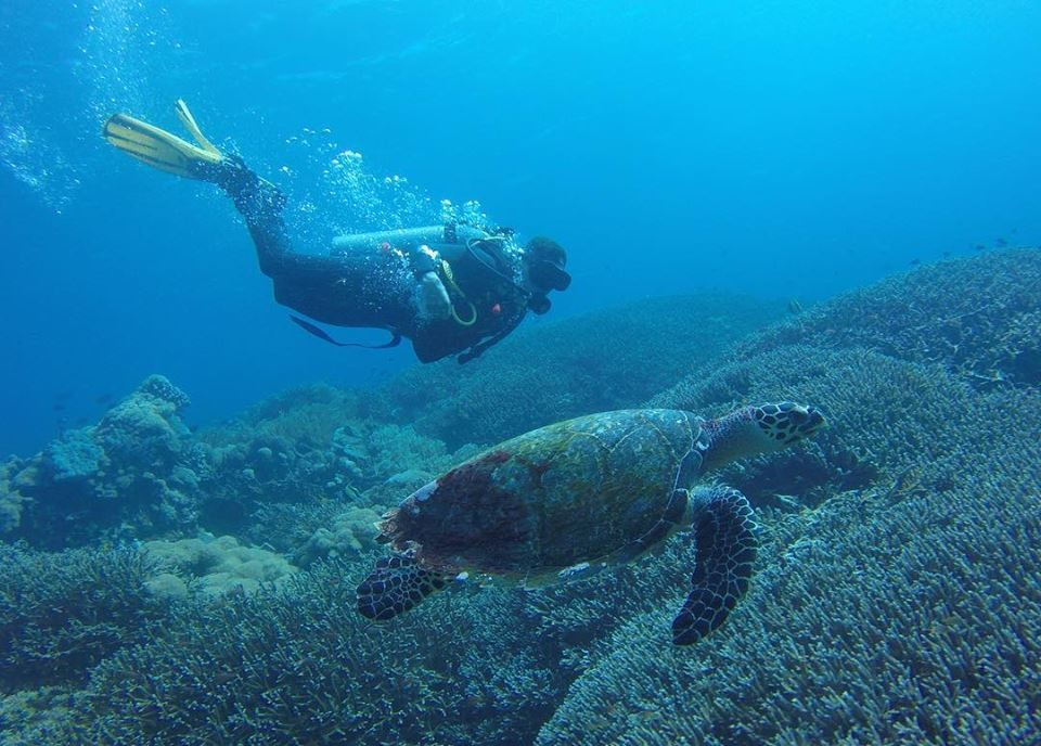 http://m.thegreatnext.com/Scuba Diving Bali Marine Life Underwater Corals Sea Creatures  Indonesia Adventure Travel The Great Next