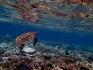 http://www.thegreatnext.com/Snorkeling Bali Marine Life Underwater Corals Sea Creatures  Indonesia Adventure Travel The Great Next