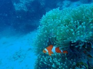 http://m.thegreatnext.com/Scuba Diving Try Dive Havelock Andaman Nicobar Adventure Travel The Great Next