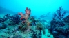 http://m.thegreatnext.com/Scuba Diving Havelock India Advance Adventurer SSI Adventure Travel The Great Next