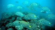 http://m.thegreatnext.com/Scuba Diving Havelock India Advance Adventurer SSI Adventure Travel The Great Next