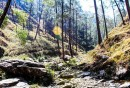 http://www.thegreatnext.com/Binsar Wildlife Sanctuary Trekking Adventure Uttarakhand The Great Next