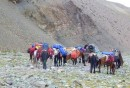 http://m.thegreatnext.com/Stok Peak Stok Ranges Ladakh Himalayas Adventure Trekking The Great Next