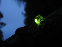 http://www.thegreatnext.com/Fireflies Bhandardara Trekking Maharashtra Starry Sky The Great Next