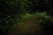 http://www.thegreatnext.com/Fireflies Trek Camping Rajmachi Lonavala Maharashtra India The Great Next