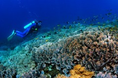 http://www.thegreatnext.com/Scuba Diving Bali Marine Life Underwater Corals Sea Creatures  Indonesia Adventure Travel The Great Next