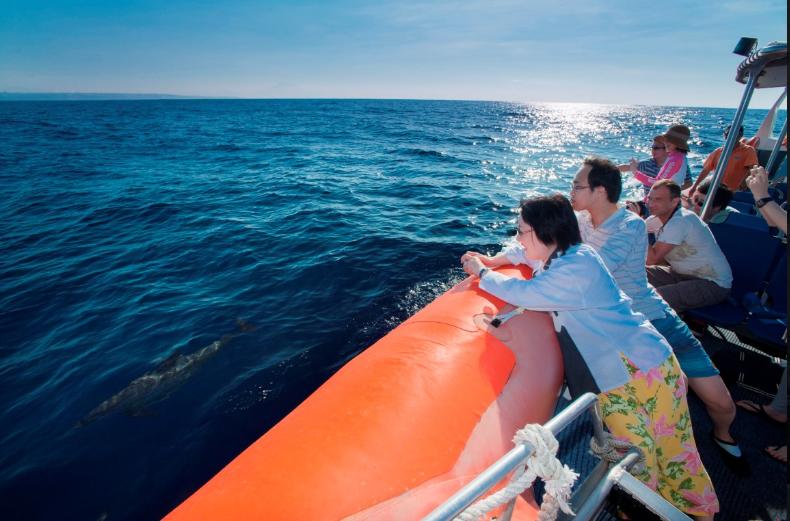http://www.thegreatnext.com/Dolphin Cruise Bali Marine Life Indonesia Adventure Travel The Great Next
