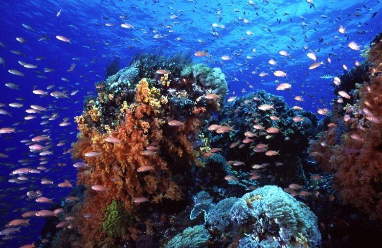 http://m.thegreatnext.com/Scuba Diving Snorkelling Cruise Bali Marine Life Underwater Corals Sea Creatures Indonesia Adventure Travel The Great Next