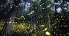 http://m.thegreatnext.com/Fireflies Trekking Bhandardara Sahyadris Mumbai Maharashtra The Great Next